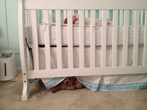 Monster under the crib